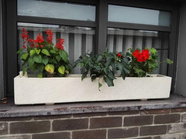 Huawei-Mate-s-flowers-in-window-1200px