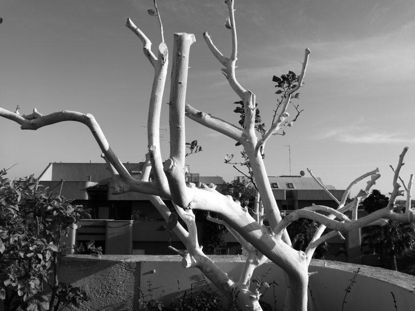 תמונה 3: עץ בשחור לבן (מקורית), צילום: גאדג'טי