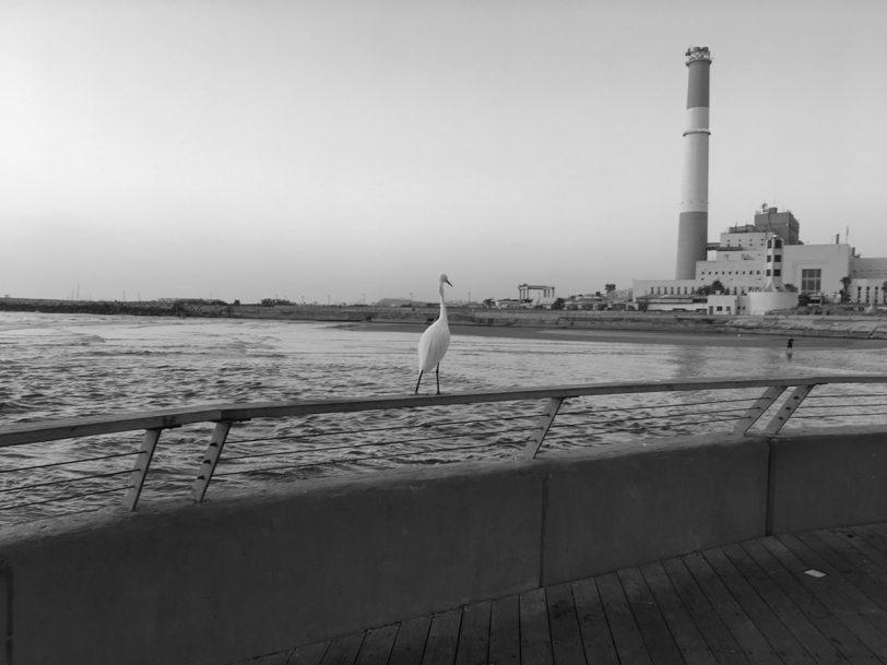 """תמונה 1: נמל ת""""א בשחור-לבן (המרה מפוטושופ), צילום: גאדג'טי"""
