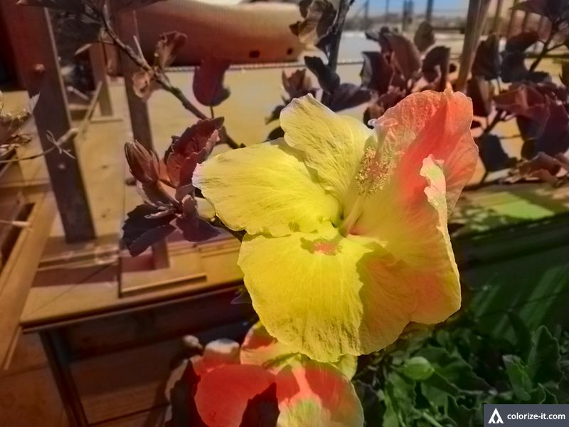 תמונה 2: פרח בצבע (המרה באמצעות אלגוריתם), צילום: גאדג'טי