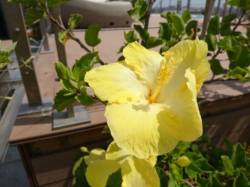 תמונה 2: פרח בצבע (מקורית), צילום: גאדג'טי