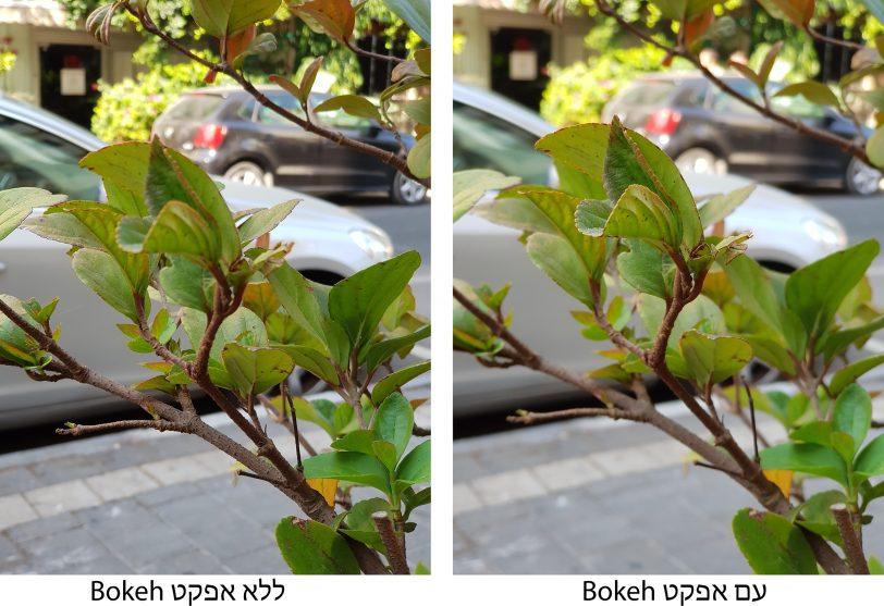 צילום צמח עם ובלי אפקט בוקה
