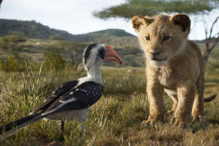 מלך האריות 2019 (תמונה באדיבות פורום פילם)