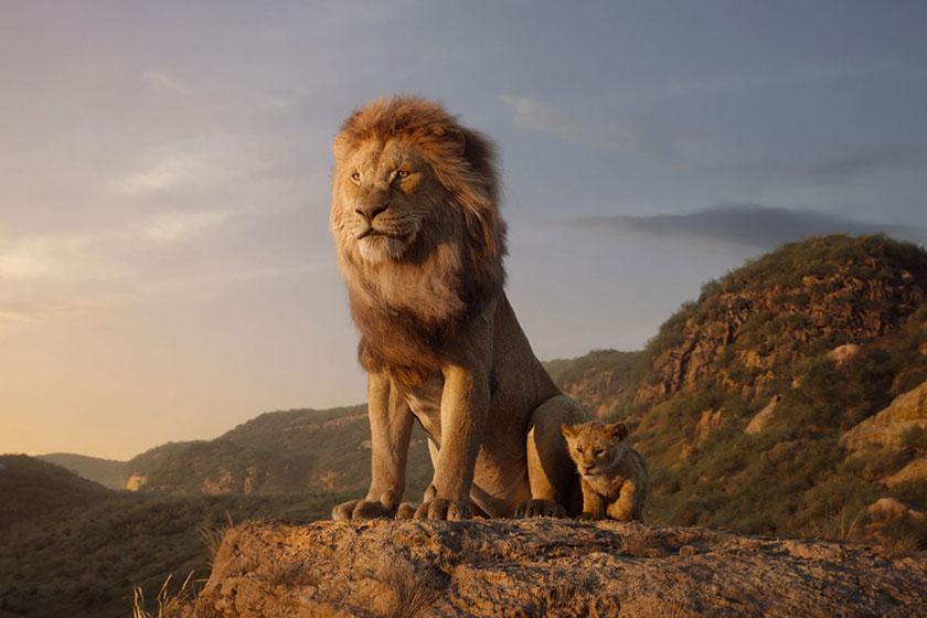 מלך האריות (תמונה באדיבות פורום פילם)