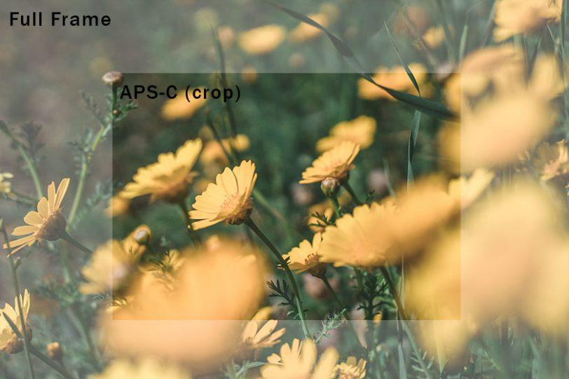 כמה תראו בפריים - פול-פריים מול APS-C (קרופ) (צילום: אופק ביטון, גאדג'טי)