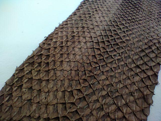 עור דגים במאקרו (צילום: רונן מנדזיצקי)