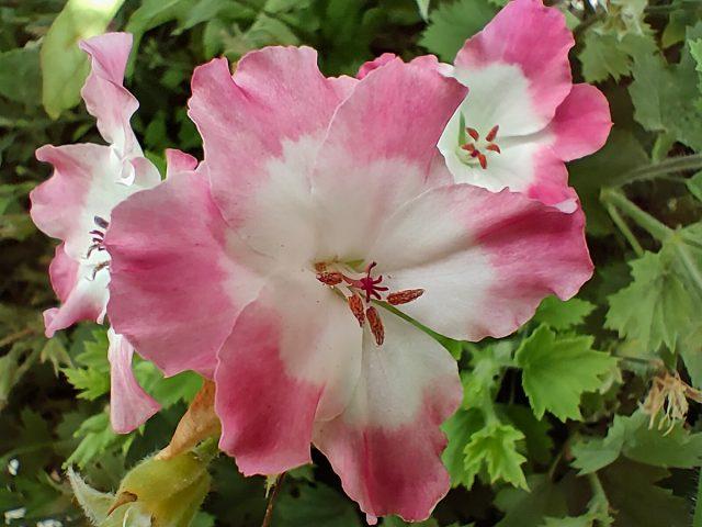 פרחים במאקרו (צילום: רונן מנדזיצקי)